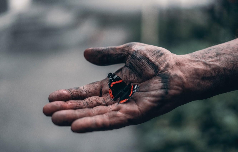 Фото обои бабочка, рука, Elijah O'Donnell