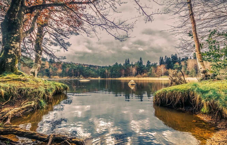 Фото обои лес, природа, озеро, берег