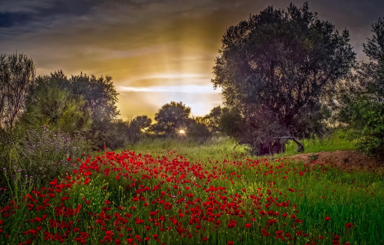Фото обои цветы, природа, утро