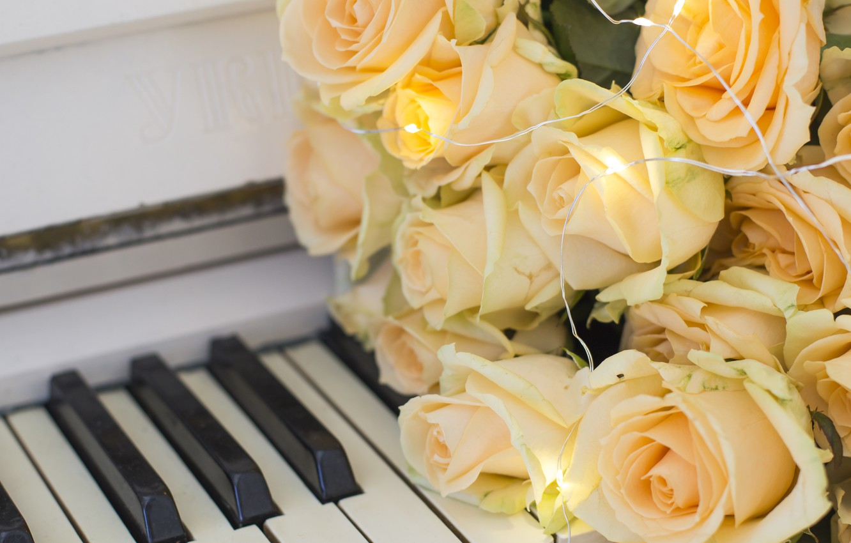 картинка роза и пианино холли, говорящий