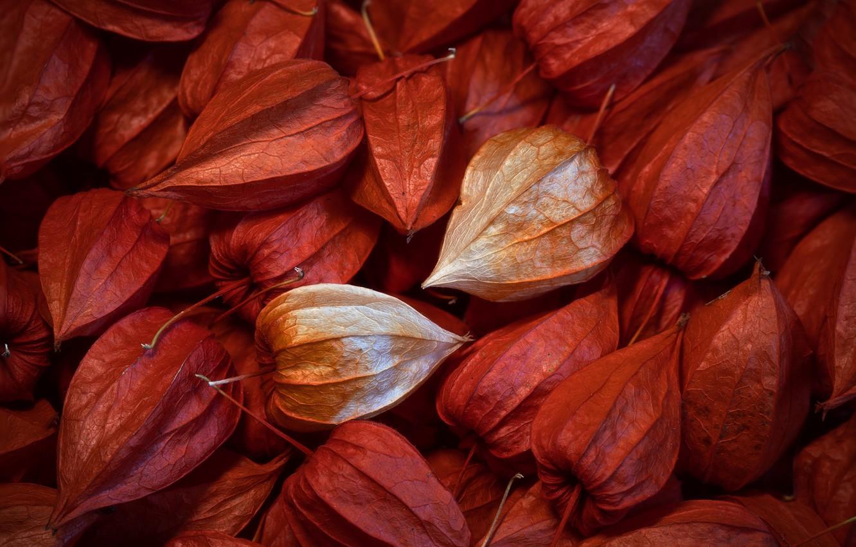 Фото обои природа, фон, цвет, форма