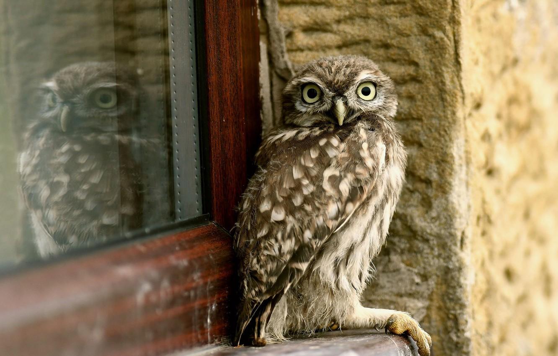 Фото обои дом, сова, птица, окно