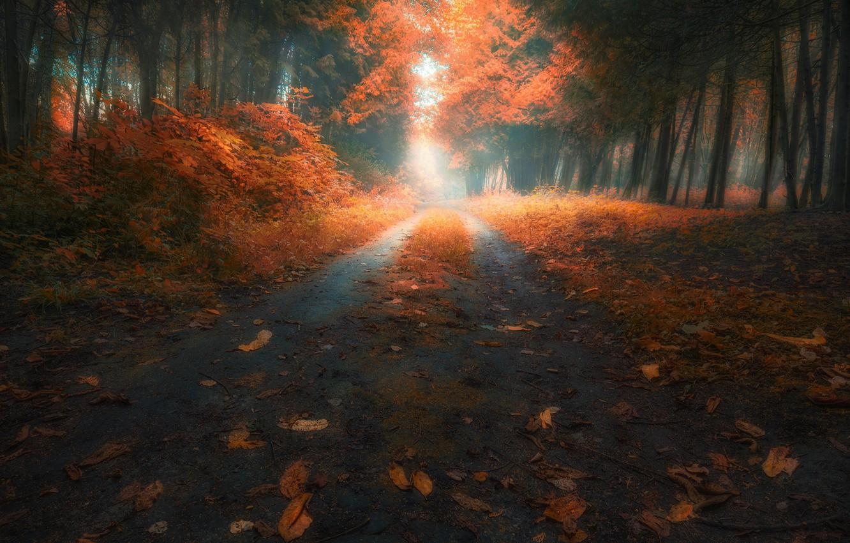 Фото обои дорога, осень, листья, деревья, Лес, Slava Lucky
