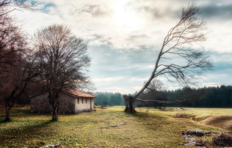 Фото обои природа, дом, дерево