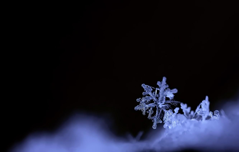 Фото обои зима, природа, снежинка