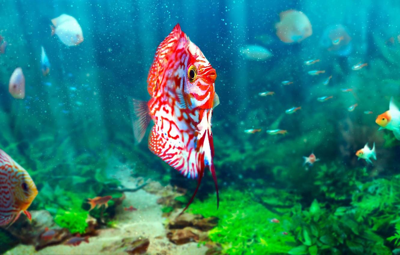 Фото обои рыбы, аквариум, Sören Meding, Realistic Aquarium