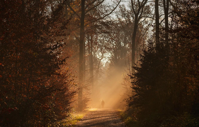Фото обои осень, лес, деревья, солнечный свет