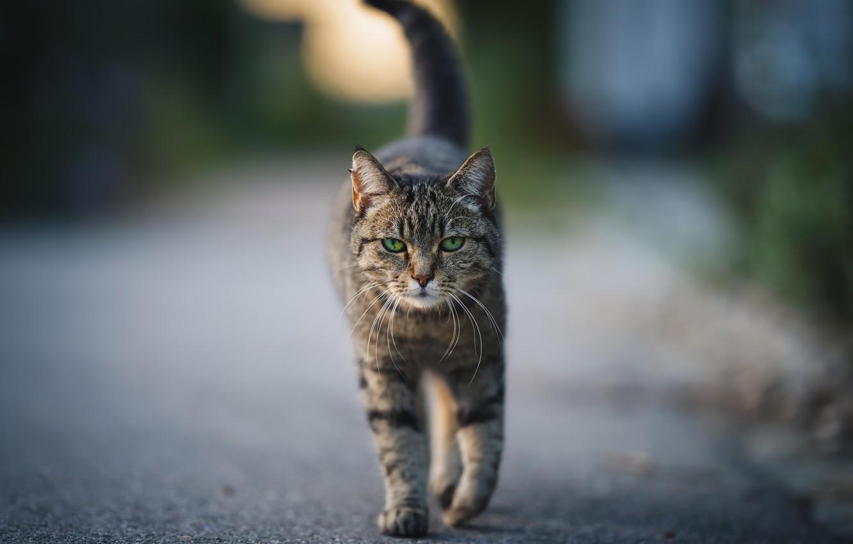 Фото обои кошка, фон, улица