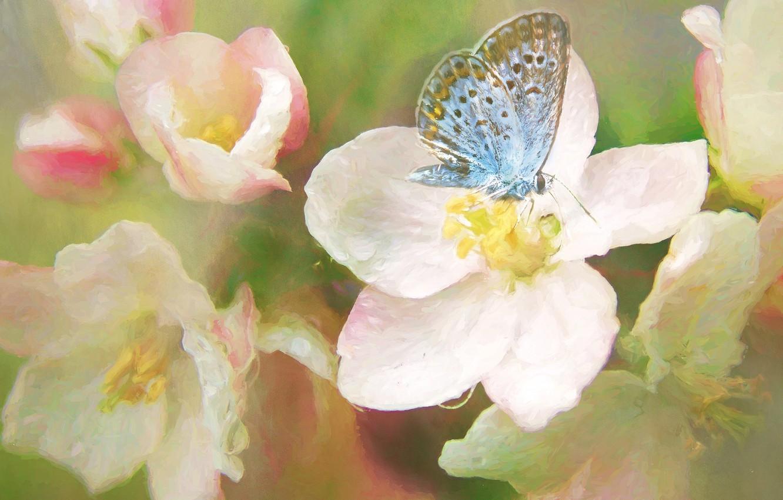 Фото обои макро, цветы, бабочка, весна, арт, живопись, цветение, голубая, мазки, фотоарт