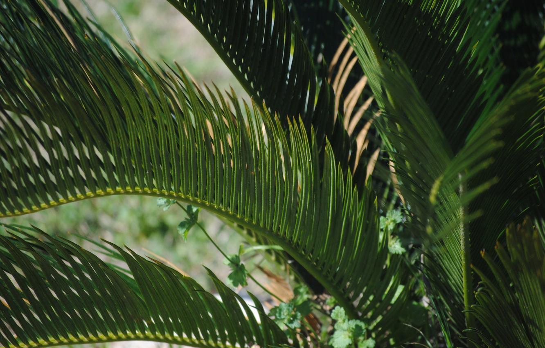 Фото обои Растение, Джунгли, Jungle, Plant, Green Background, Palm Leaves, Зеленый Фон, Пальмовые Листья
