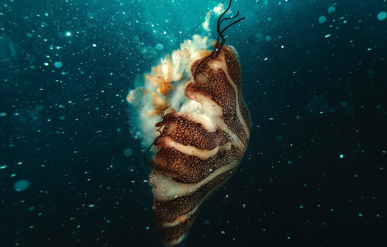 Фото обои underwater, ocean, jellyfish, bubles