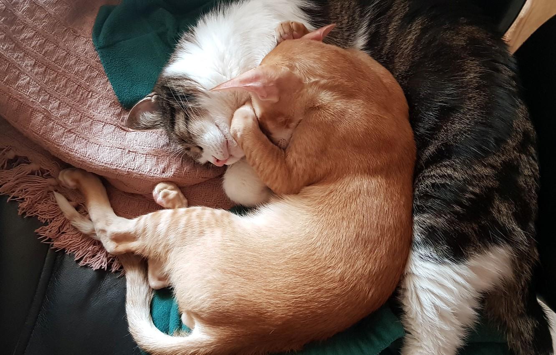 Фото обои кот, коты, день, домашние животные, спящий кот, спящие коты, дневной сон, кот спит, коты спят, …