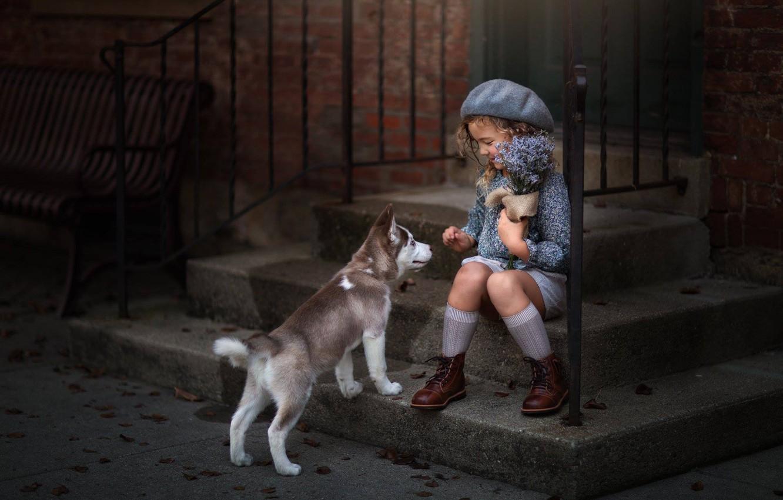 Фото обои цветы, настроение, собака, девочка, щенок, ступени, хаски, букетик