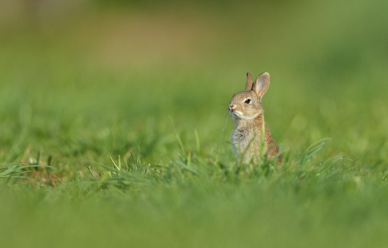 картинки заяц на лугу этой датой