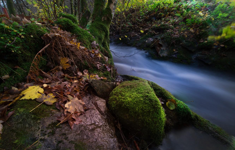Фото обои осень, лес, листья, деревья, пейзаж, природа, ручей, камни, мох, поток, Норвегия