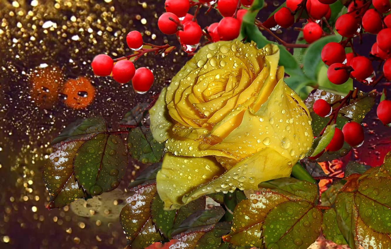 Фото обои капли, роса, ягоды, дождь, Мокрая роза