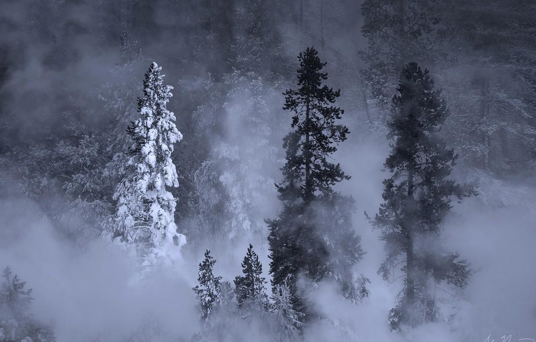Фото обои зима, лес, снег, деревья, природа, туман