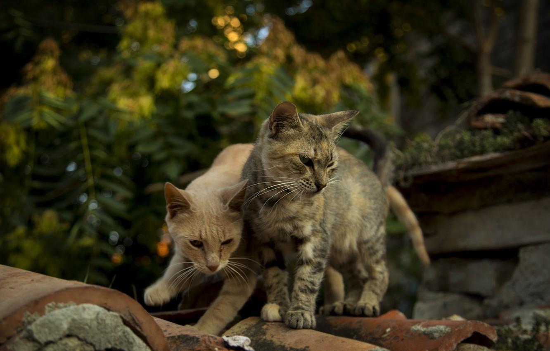 Фото обои cats, cats wallpapers, Bulgaria, Nessebar, cute cats, Kide fotoart