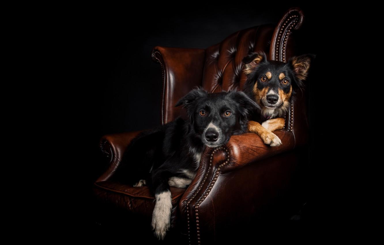 можете собака в кресле картинка немного