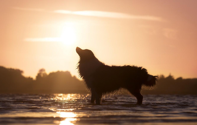 Картинка собака на закате