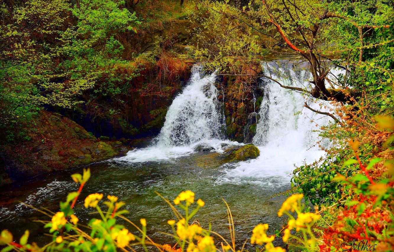 Фото обои Водопад, Река, Лес, Waterfall, River, Forest