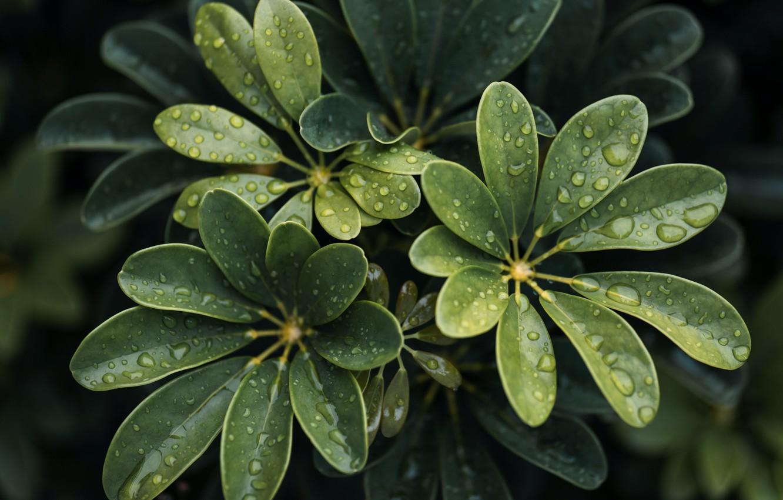 Фото обои wet, close-up, water, leaves, macro, blur, drops, plant, 6k hd background