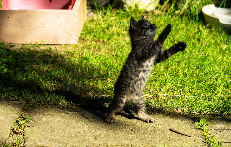 Фото обои кошка, трава, котенок, поляна, игра, малыш, котёнок, ящик, стойка