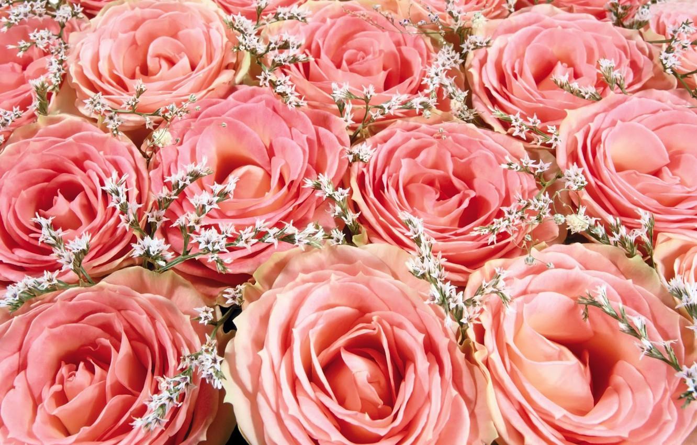 розовые розы фото букеты красивые с бриллиантами уникальным