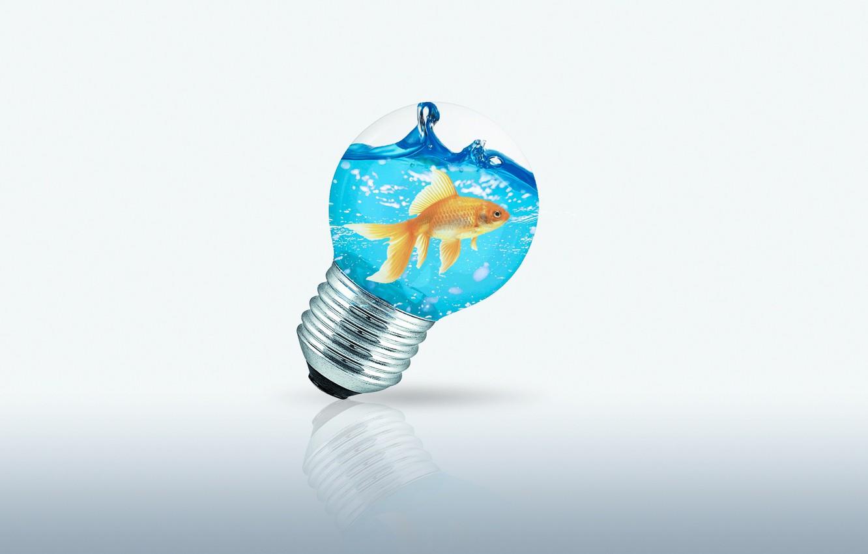 Фото обои море, вода, фото, лампа, рыбка, золотая рыбка, обои 1920x1080, обои на рабочий стол 1920x1080, рыбка …