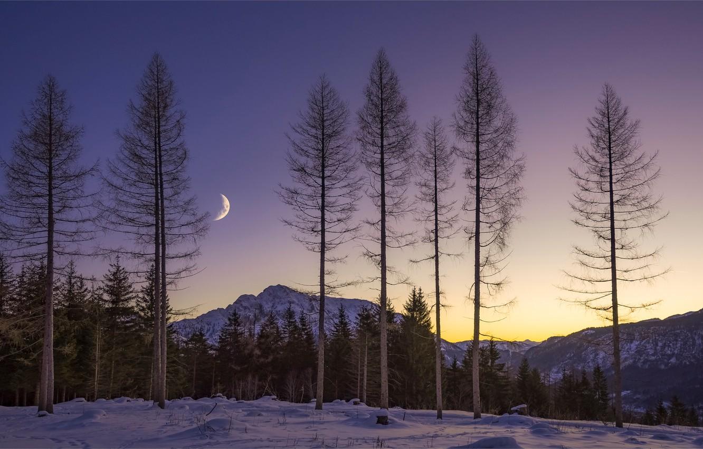 Фото обои зима, лес, небо, свет, снег, деревья, горы, ночь, ветки, рассвет, стволы, луна, месяц, вечер, утро, …