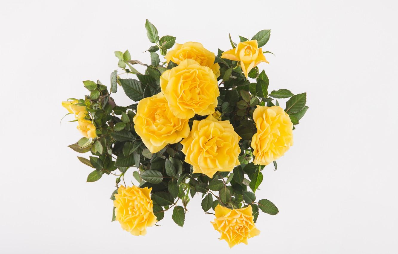 Фото обои фон, розы, букет, жёлтые