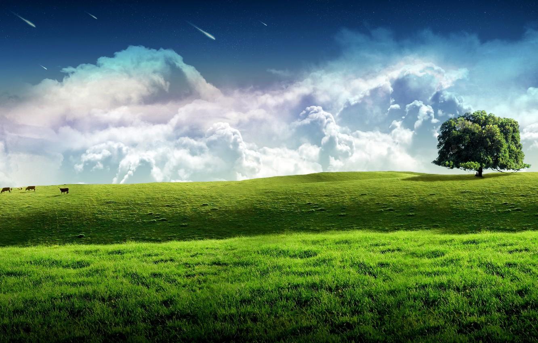 Oboi Sky Grass Green Landscape Tree Kartinki Na Rabochij Stol Razdel Pejzazhi Skachat