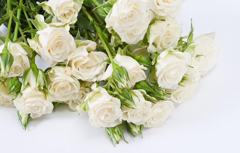 хочу картинки букет белых роз на белом фоне рокерская коза