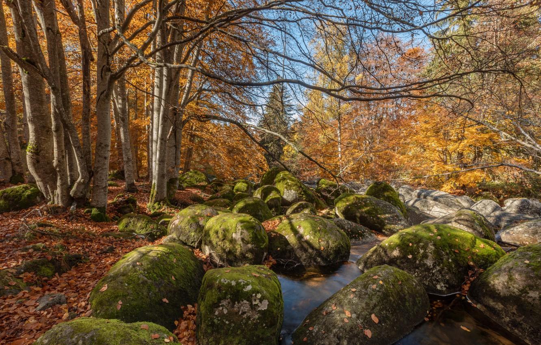 Фото обои осень, лес, вода, деревья, пейзаж, природа, камни, Александър Сандев