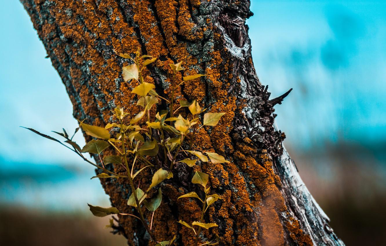 Фото обои небо, листья, синий, природа, дерево, мох