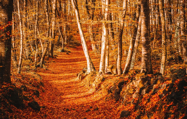 Фото обои дорога, осень, листья, деревья, парк, тропа, road, nature, park, autumn, leaves, tree, path