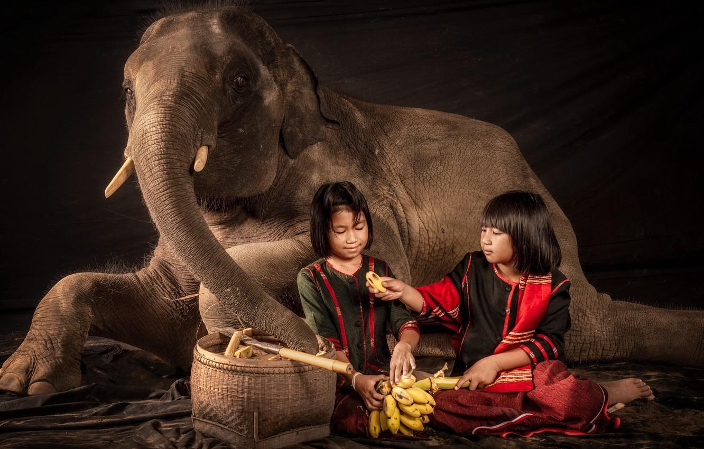 Фото обои девочки, слон, ситуация, бананы