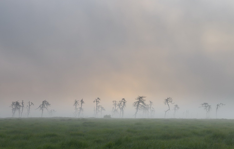 Фото обои поле, природа, туман, мёртвые деревья