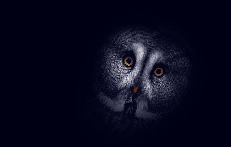 Фото обои фон, сова, темный, голова