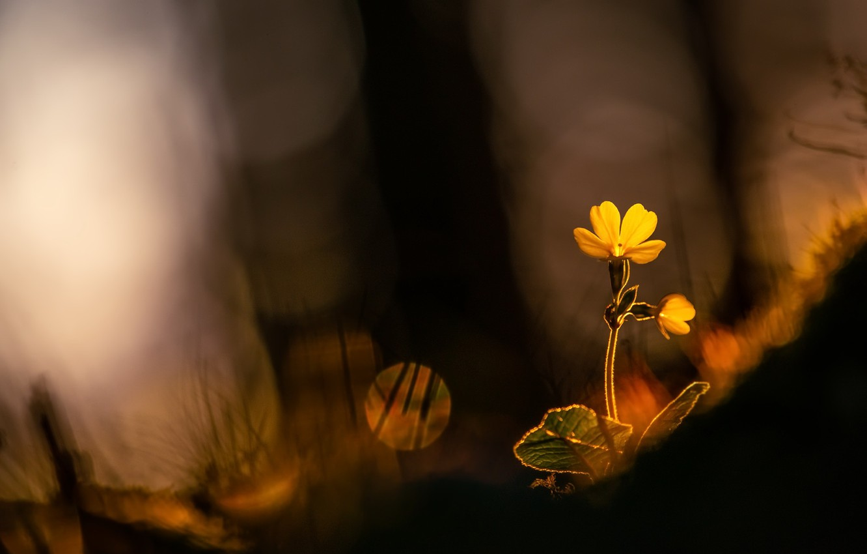 Фото обои свет, цветы, природа, весна