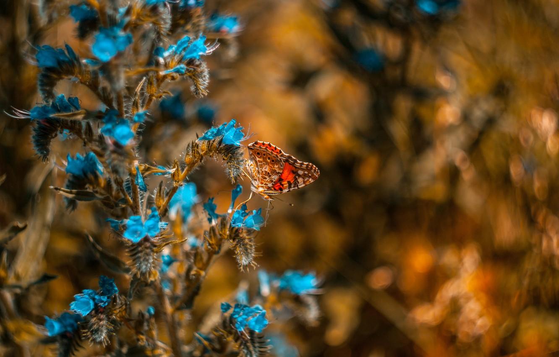 Фото обои цветы, бабочка, боке