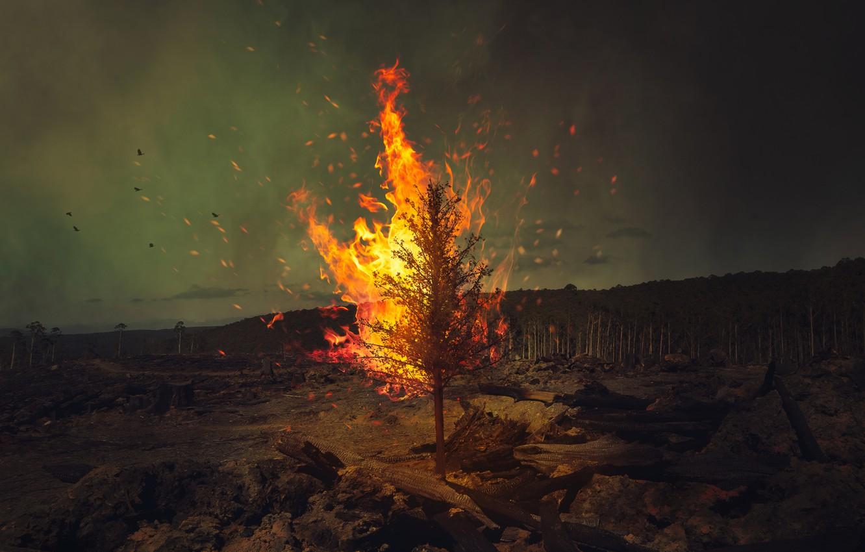 Фото обои лес, птицы, дерево, огонь, fire, forest, wood, birds, Ricardo Da Cunha