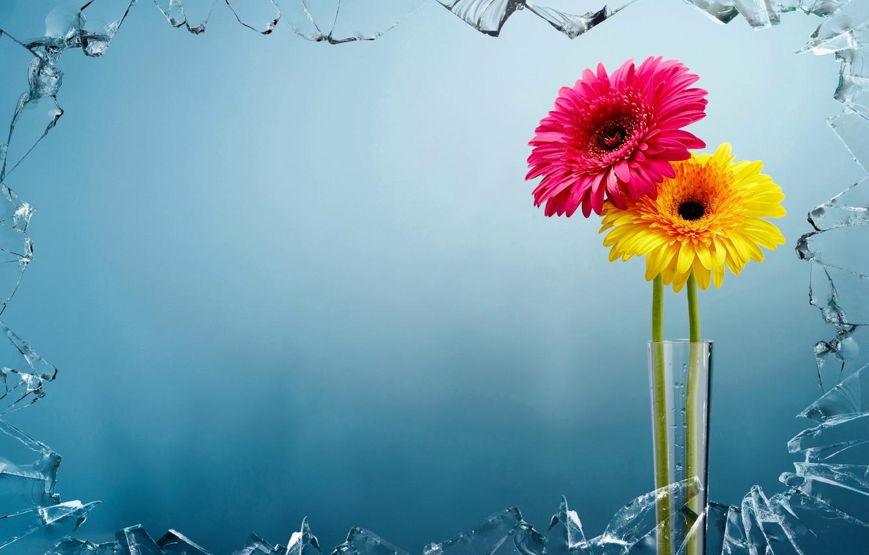 Фото обои стекло, цветы, фон, ваза
