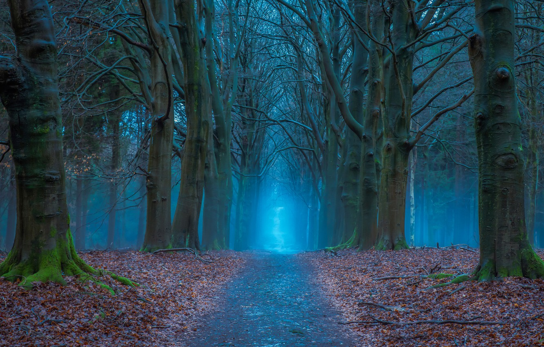 Фото обои дорога, осень, лес, деревья, Нидерланды