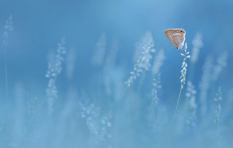 Фото обои бабочка, butterfly, Edy Pamungkas