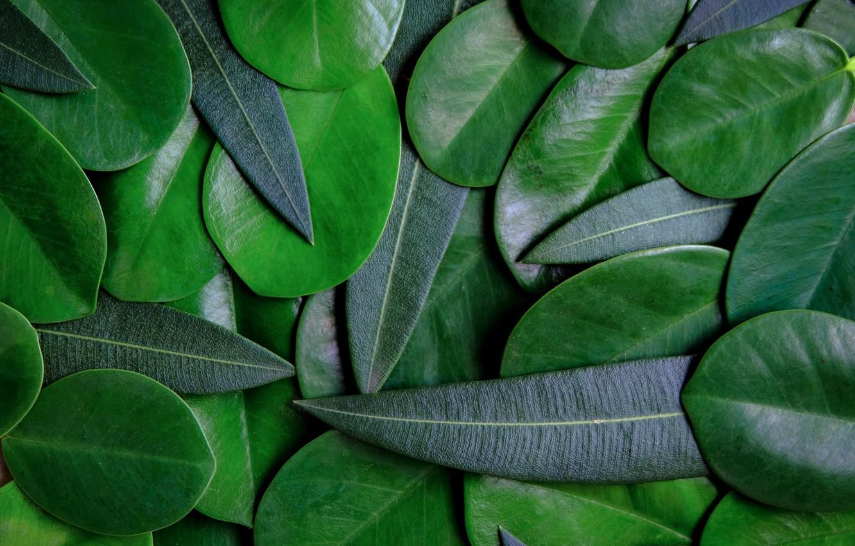 Фото обои листья, фон, green, texture, background, leaves