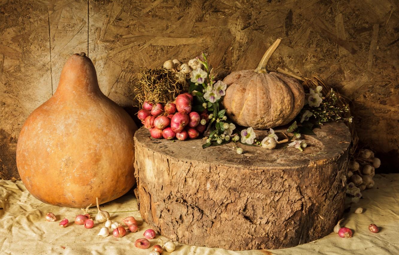Фото обои цветы, урожай, тыква, натюрморт, овощи, autumn, still life, pumpkin, vegetables, harvest