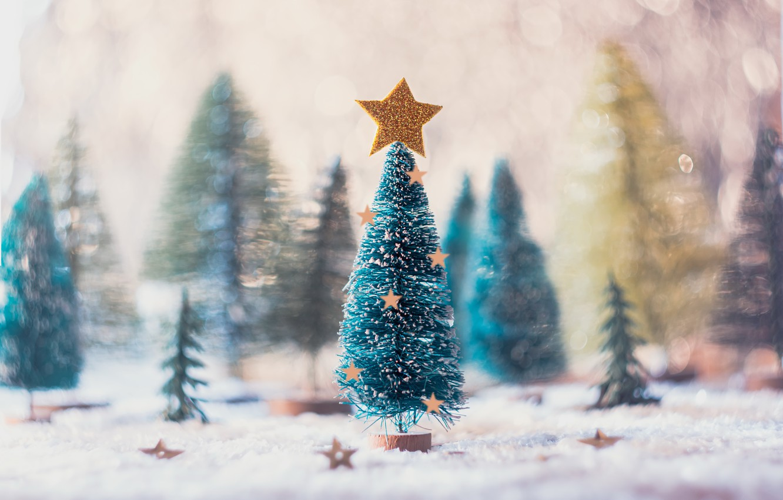 Фото обои праздник, звезда, ёлка