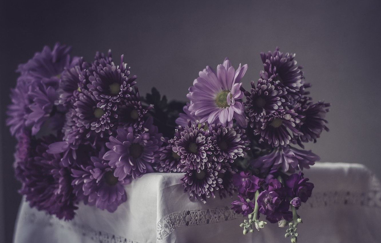 Фото обои цветы, фон, цвет