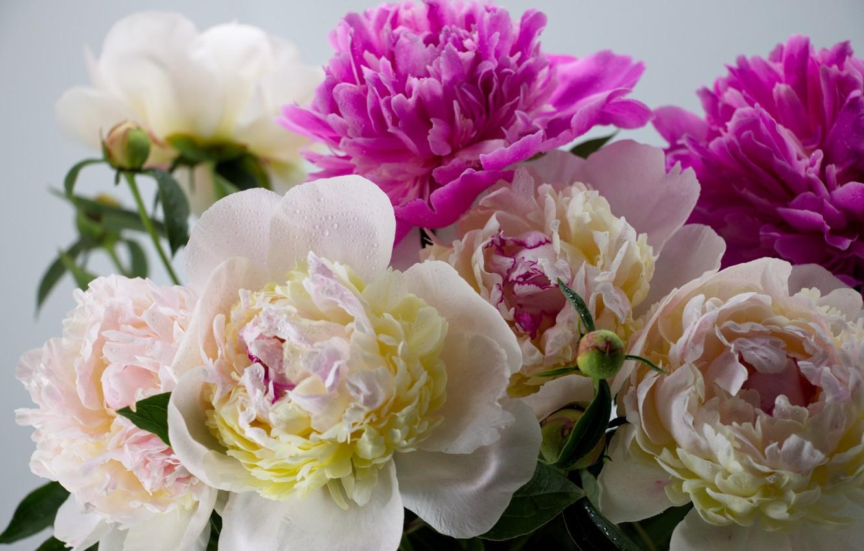Фото обои цветы, букет, flowers, пион